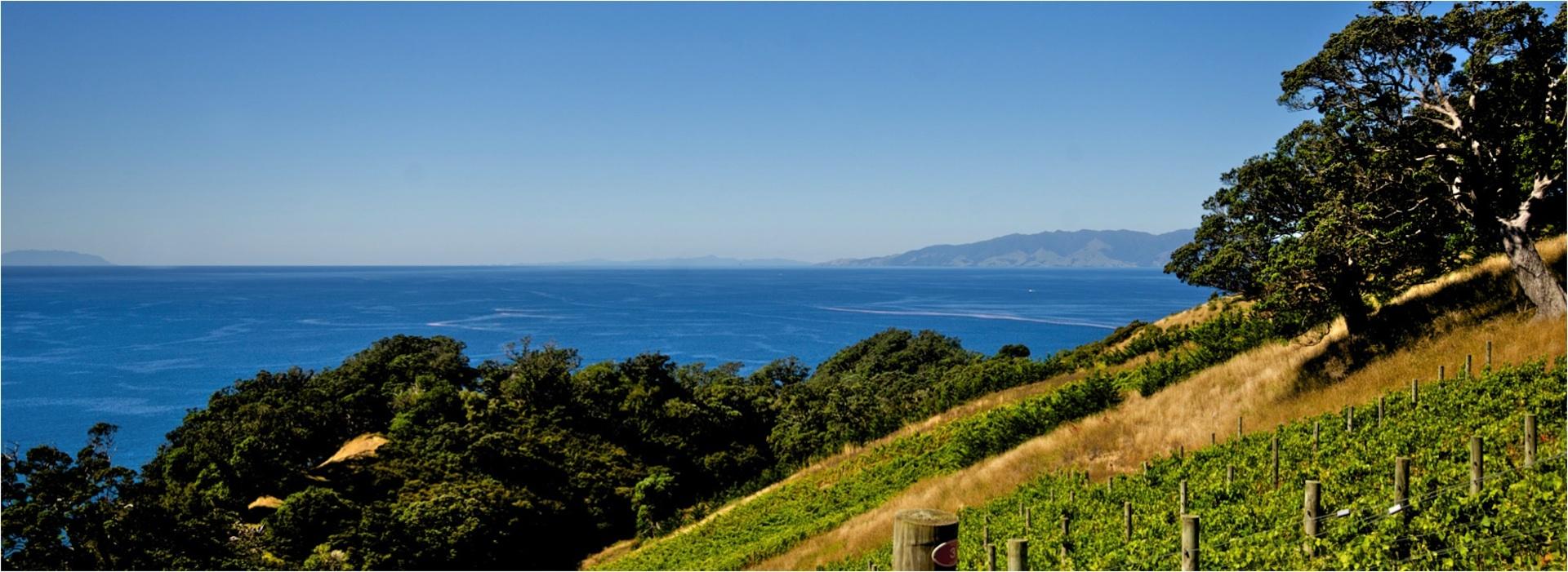 Entdecken Sie aromatische Weissweine aus Neuseeland