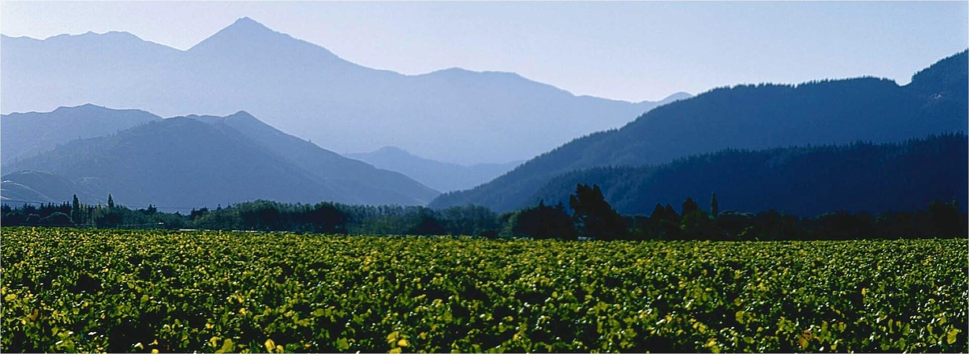 Marlborough Weine von Staete Landt